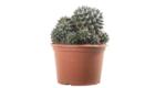 Caporalplant - Cactacee e succulente