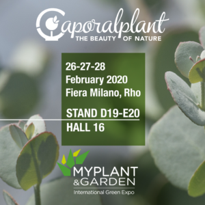 MyPlant & Garden Eucalyptus gunnii